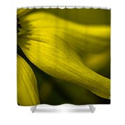 Afternoon Flower Shower Curtain