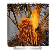 Afternoon Glow Shower Curtain