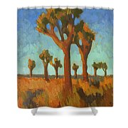 Afternoon Light At Joshua Tree Shower Curtain