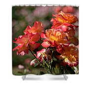 Afternoon Roses Shower Curtain