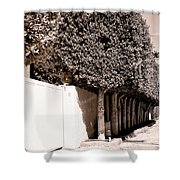 Afternoon Sun Bw Palm Springs Shower Curtain