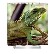 Agamidae Shower Curtain