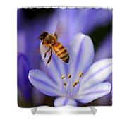 Agapanthus Africanus Shower Curtain