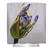 Agapanthus Blue Shower Curtain
