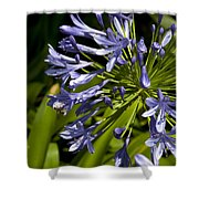 Agapanthus Flower And Bee Shower Curtain