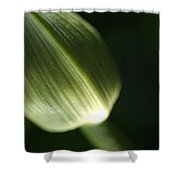 Agapanthus Green Shower Curtain