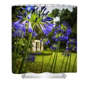 Agapanthus In The Garden Shower Curtain