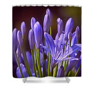 Agapanthus - Lily Of The Nile - African Lily Shower Curtain