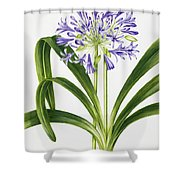 Agapanthus Shower Curtain