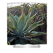 Agave At Sunset Shower Curtain