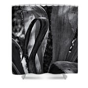 Agave Black And White Dsc08571 Shower Curtain