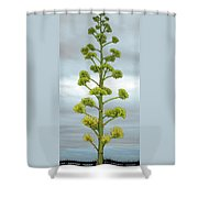 Agave Flower Spike Shower Curtain
