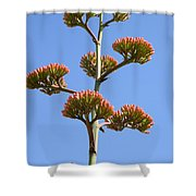 Agave Flowers II Shower Curtain