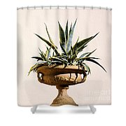 Agave In Pot Shower Curtain