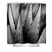 Agave Plant Shower Curtain