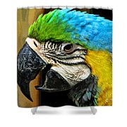 Age And Beauty Shower Curtain