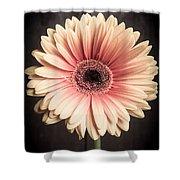 Aster Flower Shower Curtain