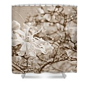 Antique Magnolia Bloom Shower Curtain