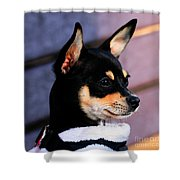 Agie - Chihuahua Pitbull Shower Curtain