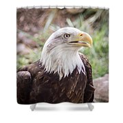 Aging Patriot Shower Curtain