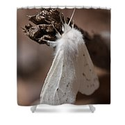 Agreeable Tiger Moth Shower Curtain