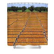 Agriculture - Blenheim Apricots Shower Curtain