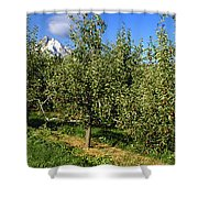 Agriculture - Bosc Pear Orchard Shower Curtain