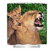 Ah Being A Mother Is Wonderful African Lions Wildlife Rescue Shower Curtain