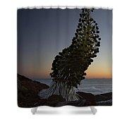 Ahinahina - Silversword - Argyroxiphium Sandwicense - Summit Haleakala Maui Hawaii Shower Curtain