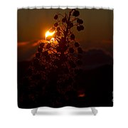 Ahinahina - Silversword - Argyroxiphium Sandwicense - Sunrise On The Summit Haleakala Maui Hawaii  Shower Curtain