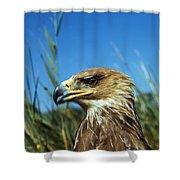 Aigle Imperial Aquila Heliaca Shower Curtain