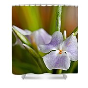 Air Plant Flower Shower Curtain