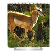 Airborn Pronghorn Shower Curtain