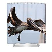 Airborne Brown Pelican Shower Curtain