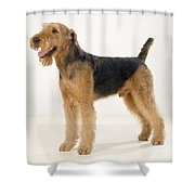 Airedale Terrier Dog Shower Curtain