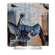 Airing Out Shower Curtain by Shannon Harrington