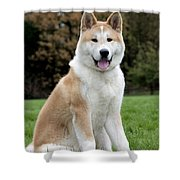 Akita Inu Dog Shower Curtain