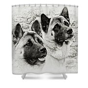 Akitas Shower Curtain