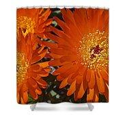 Orange Burst Akuli Kuli Shower Curtain