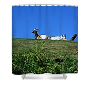 Al Johnsons Resturant Goats Shower Curtain