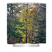 Alabama Forest In Autumn 2012 Shower Curtain