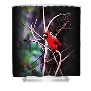 Alabama Rain - Cardinal Shower Curtain