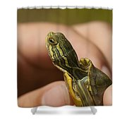 Alabama Red-bellied Turtle -  Pseudemys Alabamensis Shower Curtain