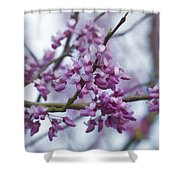 Alabama Redbuds Shower Curtain