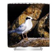 Alabama Tern Shower Curtain