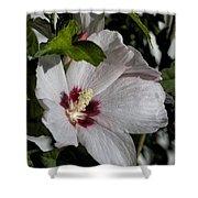 Alabama Wildflower -  Woolly Rose Mallow Shower Curtain