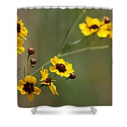 Alabama Wildflowers Coreopsis Tinctoria Tickseed Shower Curtain
