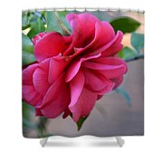 Alabama's Fading Camelia Shower Curtain