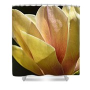 Alabama's Tulip Magnolia Shower Curtain