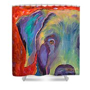 Aladdin Shower Curtain by Pat Saunders-White